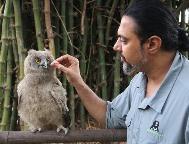 Wildlife SOS dusky eagle owl
